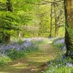 path through woods purple flowers